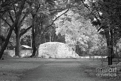 Photograph - Road To The Ruins Copan Honduras by John  Mitchell