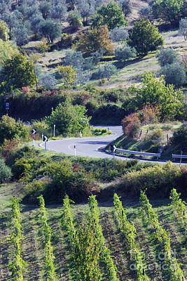Road Winding Through Vineyard And Olive Trees Art Print by Jeremy Woodhouse