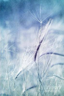 Wall Art - Photograph - Roadside Blues by Priska Wettstein