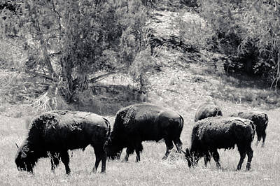 Photograph - Roaming Buffalo Near Zion by Julie Niemela
