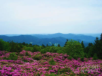 Photograph - Roan Mountain by Crystal Joy Photography