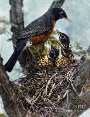 Robin And Babies In Nest Art Print by Jill Battaglia