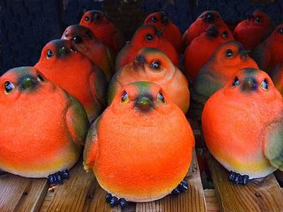 Photograph - Robin Army by Ed Lukas