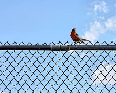 Robin Bird Sitting On A Fence Art Print