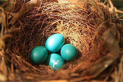 Photograph - Robin Eggs  by Emanuel Tanjala