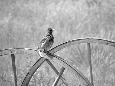 Photograph - Robin On A Cart Wheel by HW Kateley