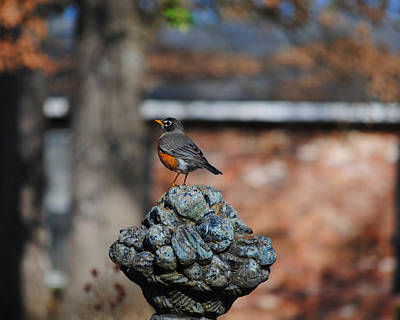 Photograph - Robin On Statue by Jai Johnson