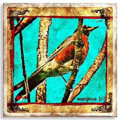 Robin Perch  Art Print