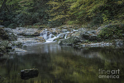 Photograph - Rock And Leaves by David Waldrop