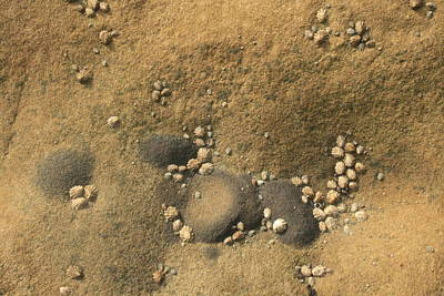 Rock And Shells Art Print