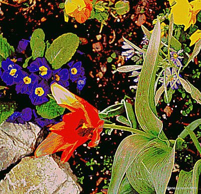 Photograph - Rock Garden by Diane montana Jansson