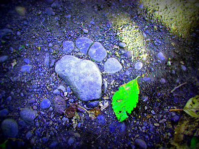 Photograph - Rock Paw by Lisa Rose Musselwhite