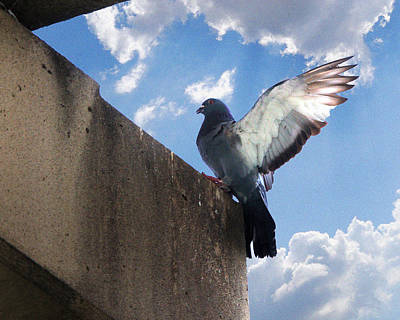 Studio Grafika Zodiac - Rock Pigeon Landing by Roy Williams