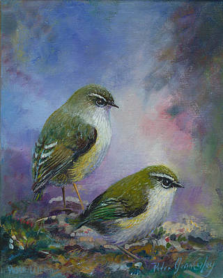 Rock Wren New Zealand Art Print by Peter Jean Caley