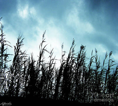 Photograph - Rockefeller Wma Grasses by Lizi Beard-Ward