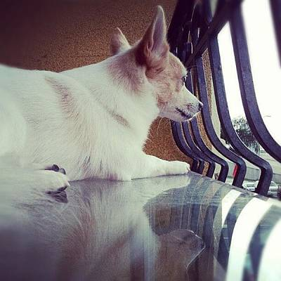 Pet Photograph - Rocko <3 #dog #cute #reflection #puppy by Mandy Shupp