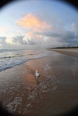 Photograph - Rocko At Sunrise by Mandy Shupp