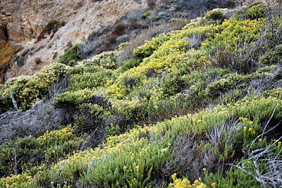 Photograph - Rocks And Wildflowers by Harvey Barrison