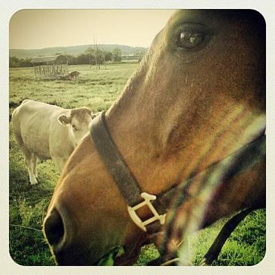 Pferd Wall Art - Photograph - Rocky + Cow #rocky #horse #pferd #cow by Malte Bauer