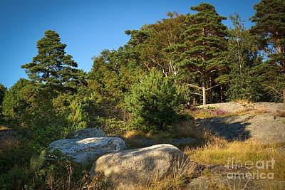 Forest Scenes Photograph - Rocky Forest Scene by Lutz Baar