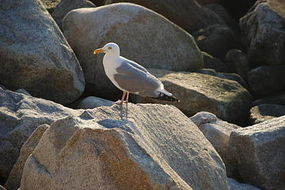 Photograph - Rocky Gull by Richard Bryce and Family