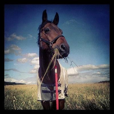 Rocky #horse #pferd #rocky Art Print