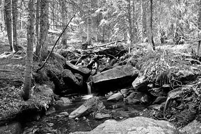 Photograph - Rocky Mountain Forest Stream Landscape Bw by James BO Insogna