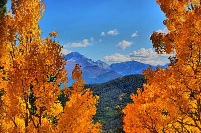 Photograph - Rocky Mountain Yellow by Emily Stauring