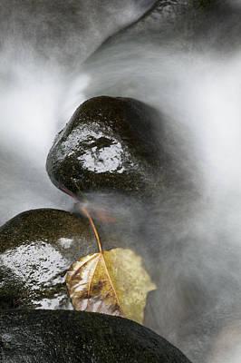 Rocky Riverbed And Leaf Print by Jenna Szerlag