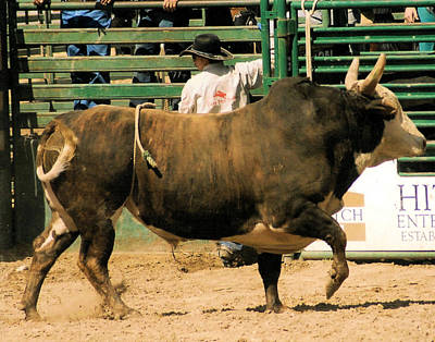Photograph - Rodeo Bull  by Cheryl Poland