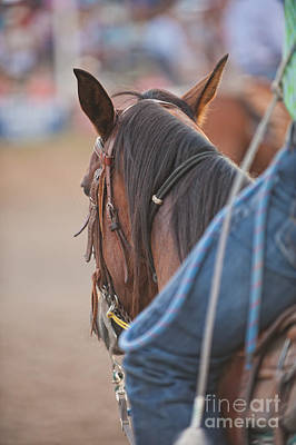 Working Cowboy Photograph - Rodeo Time by Andre Babiak