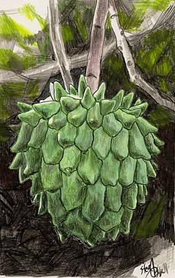 Snotfruit Drawing - Rollinia by Steve Asbell