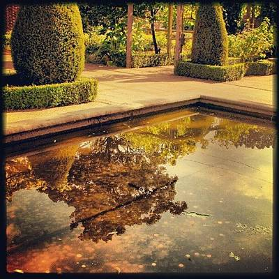 Classical Photograph - Roman Gardens From Chester Zoo by Alexandra Cook