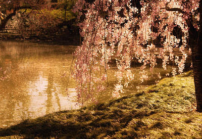 Spring Landscape Photograph - Romance - Sunlight Through Cherry Blossoms by Vivienne Gucwa