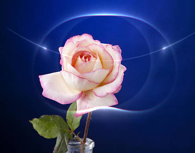 Romance Rose Art Print by M K  Miller
