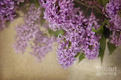 Photograph - Romantic Lilac by Cheryl Davis