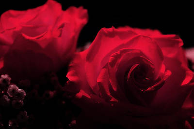 Photograph - Romantic Red by Scott Hovind
