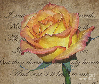 Photograph - Romantic Rose by Patricia Griffin Brett