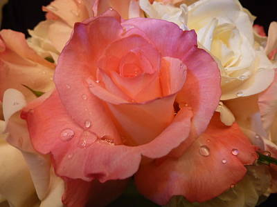 Art Print featuring the photograph Romantic Roses And Raindrops by Cindy Wright