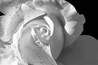 Romantic White Bridal Rose Art Print