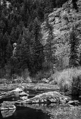 Photograph - Roosevelt National Forest by David Waldrop
