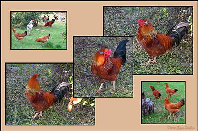 Photograph - Rooster Red by Joyce Dickens