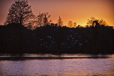 Photograph - Roosting Egrets On River by Carolyn Marshall