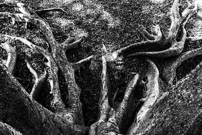 Photograph - Roots by Nicholas Evans