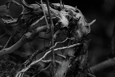 Photograph - Roots by Scott Hovind