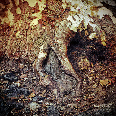 Photograph - Roots by Silvia Ganora