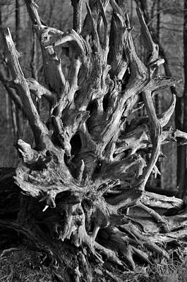 Treeroots Photograph - Roots by Toshihide Takekoshi