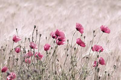 Pink Poppy Field  Art Print by Tanja Riedel