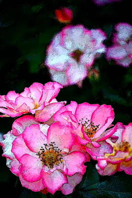 Rose 121 Art Print by Pamela Cooper