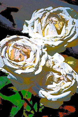 Rose 126 Art Print by Pamela Cooper